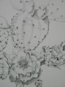 Prickly Pear Cactus Drawing